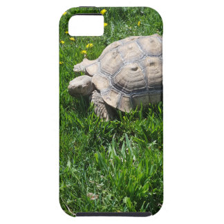 African sulcata tortoise iPhone 5 cover