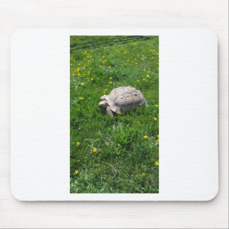 African sulcata tortoise mouse pad