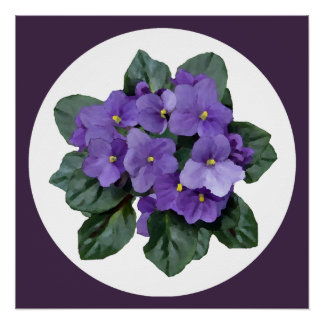 African Violet Beautiful Purple Houseplant Poster