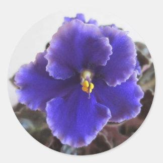 African Violet Blooming Round Sticker