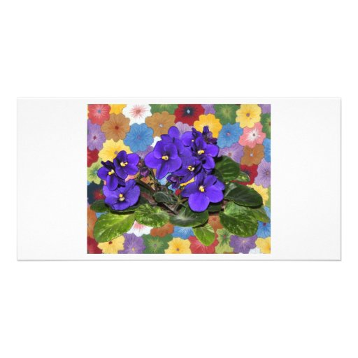 African violet photo card template