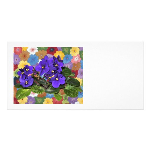 African violet photo cards