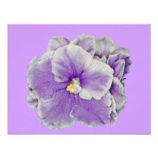 African Violet Purple Announcements