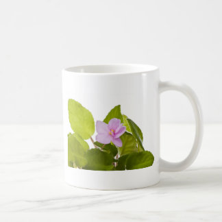 african violet - saintpaulia ionantha coffee mug