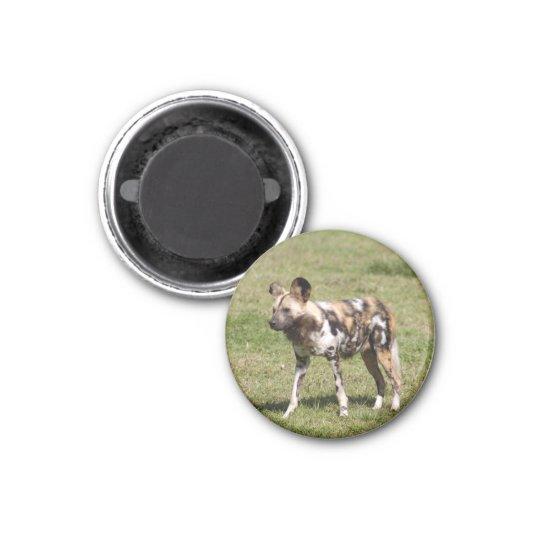 african-wild-dog-016 magnet