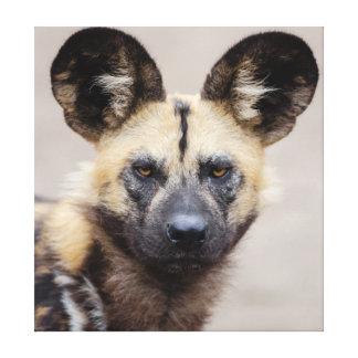 African wild dog canvas print