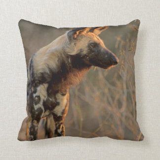 African Wild Dog (Lycaon Pictus), Kruger Cushion