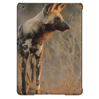 African Wild Dog (Lycaon Pictus), Kruger iPad Air Cover