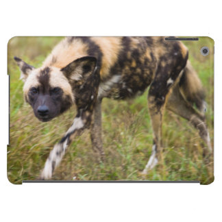 African Wild Dog (Lycaon Pictus), Madikwe Game iPad Air Covers