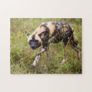 African Wild Dog (Lycaon Pictus), Madikwe Game Jigsaw Puzzle