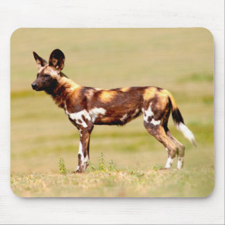 African Wild Dog (Lycaon Pictus) Standing Mouse Pad