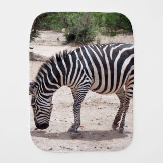 African zebra at the zoo baby burp cloth