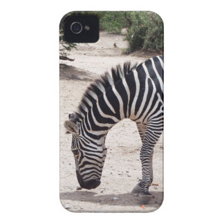 African zebra at the zoo Case-Mate iPhone 4 case