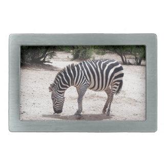 African zebra at the zoo rectangular belt buckles