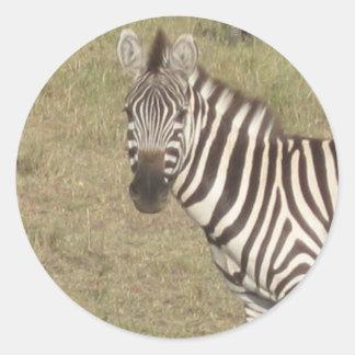 African Zebra Round Sticker