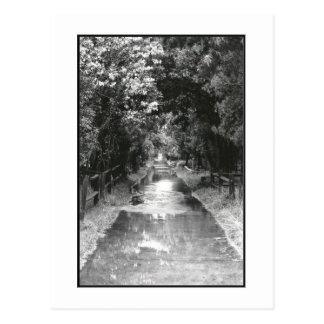 'After the Rain' Fire Island Postcard