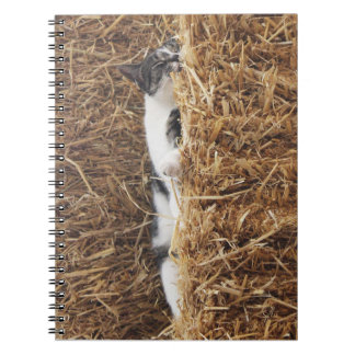Afternoon Cat Nap Notebooks