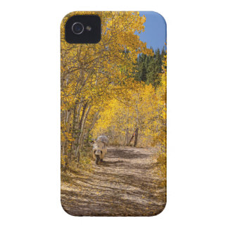 Afternoon Drive iPhone 4 Case-Mate Case