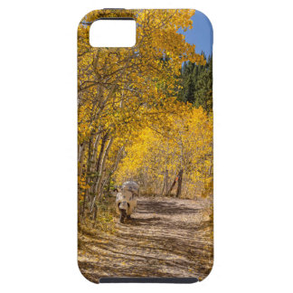 Afternoon Drive iPhone 5 Covers