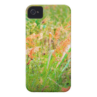 Afternoon Floral Scene Photo iPhone 4 Case