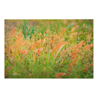 Afternoon Floral Scene Photo Wood Wall Decor