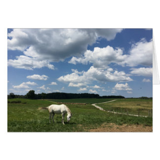 Afternoon Horse Get Well Greeting Card