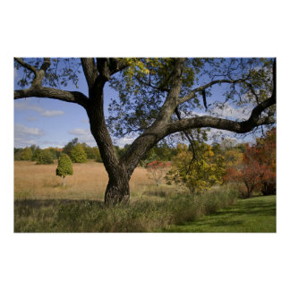 Afternoon meadow print