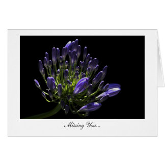 Agapanthus, African Lily - Missing You Card