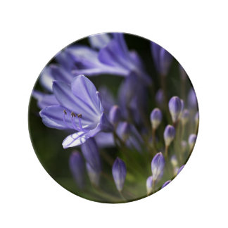 Agapanthus Blue Dreaming Small Porcelain Plate