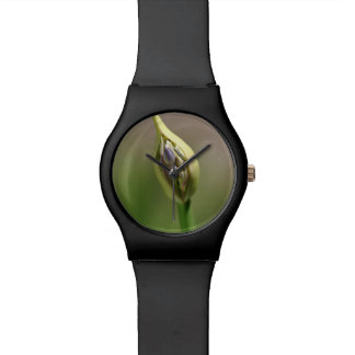 Agapanthus Bud Wristwatches