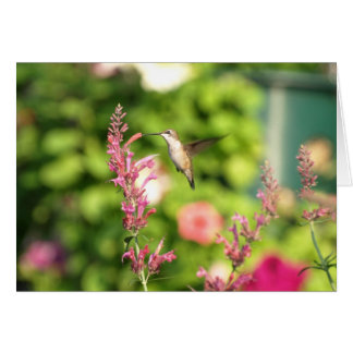 Agastache Hummer Greeting Card