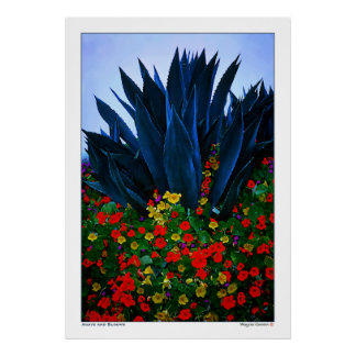 AGAVE and BLOOMS - CALIFORNIA COAST Poster