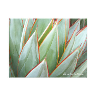 Agave 'Blue Glow' canvas by Debra Lee Baldwin Canvas Print