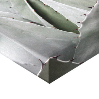 Agave Dreams Canvas Print