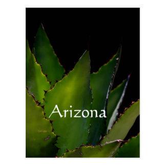 Agave glow Arizona Postcard