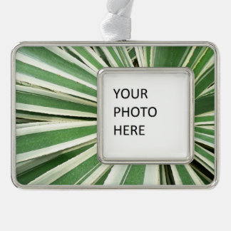 Agave Plant Green and White Stripe Silver Plated Framed Ornament