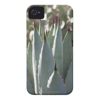 Agave Spikes iPhone 4 Cases