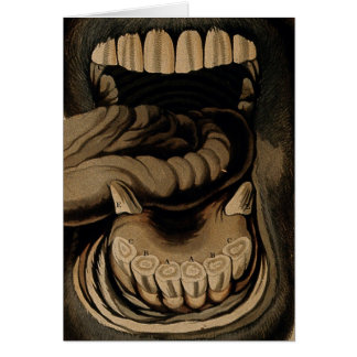 Ages of The Horse Mouth Teeth Etching Watercolor Card