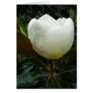 Aggelikis Magnificent Magnolia Flower Card