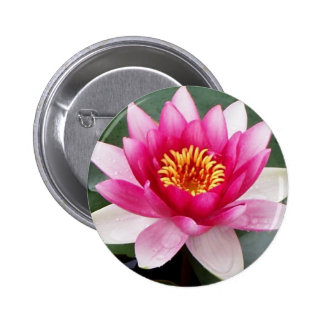 Aggelikis Pink Waterlilly Design Pinback Button