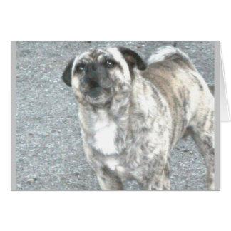 Aggravated Barking Bulldog Card