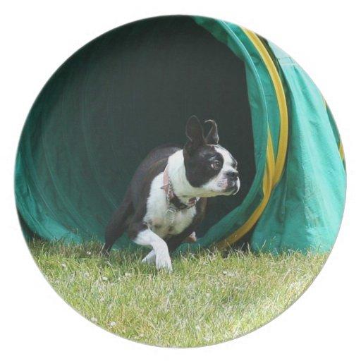 Agility Boston Terrier decorative plate