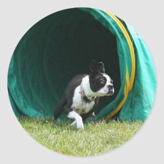 Agility Boston Terrier Round Sticker
