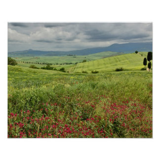 Agricultural field, Tuscany region of Italy. Poster