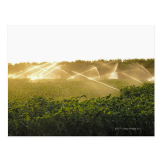 Agricultural irrigation system watering 2 postcard