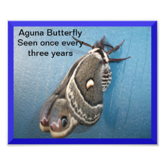 Aguna Butterfly Photo Enlargement