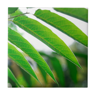 Ailanthus branch with narrow leaves ceramic tile