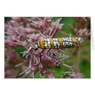 Ailanthus Webworm Moth (Atteva punctella) Items Card