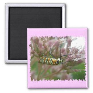 Ailanthus Webworm Moth (Atteva punctella) Items Square Magnet