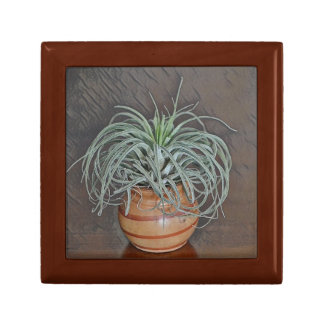 Air Plant Small Square Gift Box
